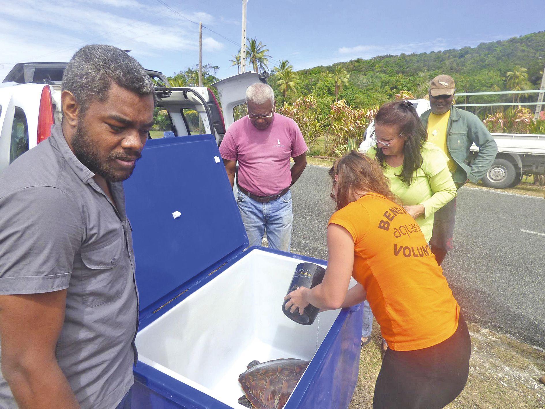 Durant son transport, la tortue a été régulièrement imprégnée d'eau de mer, humidifiée et hydratée.