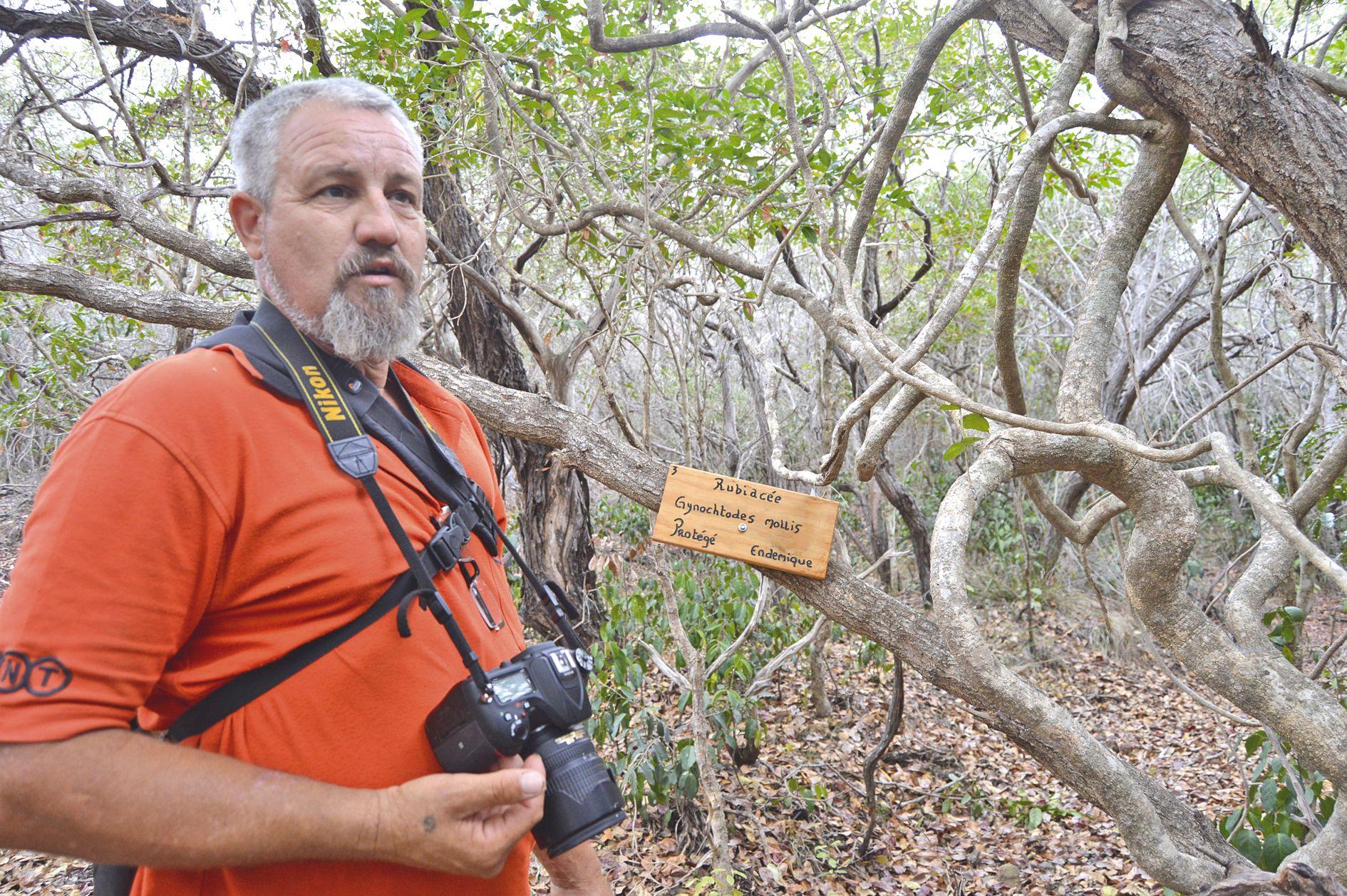 Témala. Glenn Bernanos guide, d'un pas leste, entre les  essences de forêt sèche et de maquis minier.
