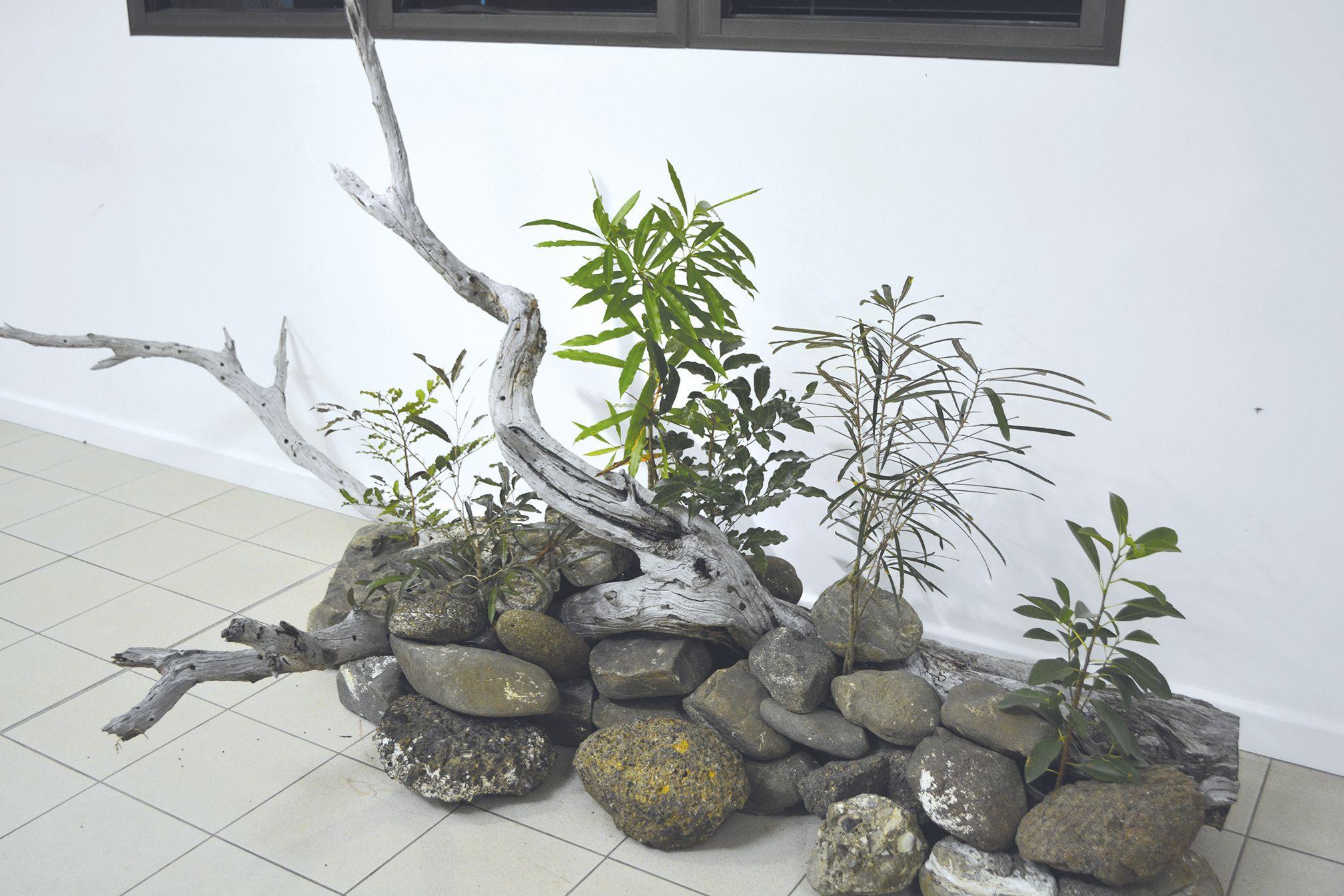 Les visiteurs ont pu découvrir plusieurs essences qui peuplent la forêt sèche de Déva, « la plus grande du pays » dixit Audrey Letocart, ingénieur responsable du développement et de la préservation du domaine de Déva. « Les visiteurs retrouveront une séle