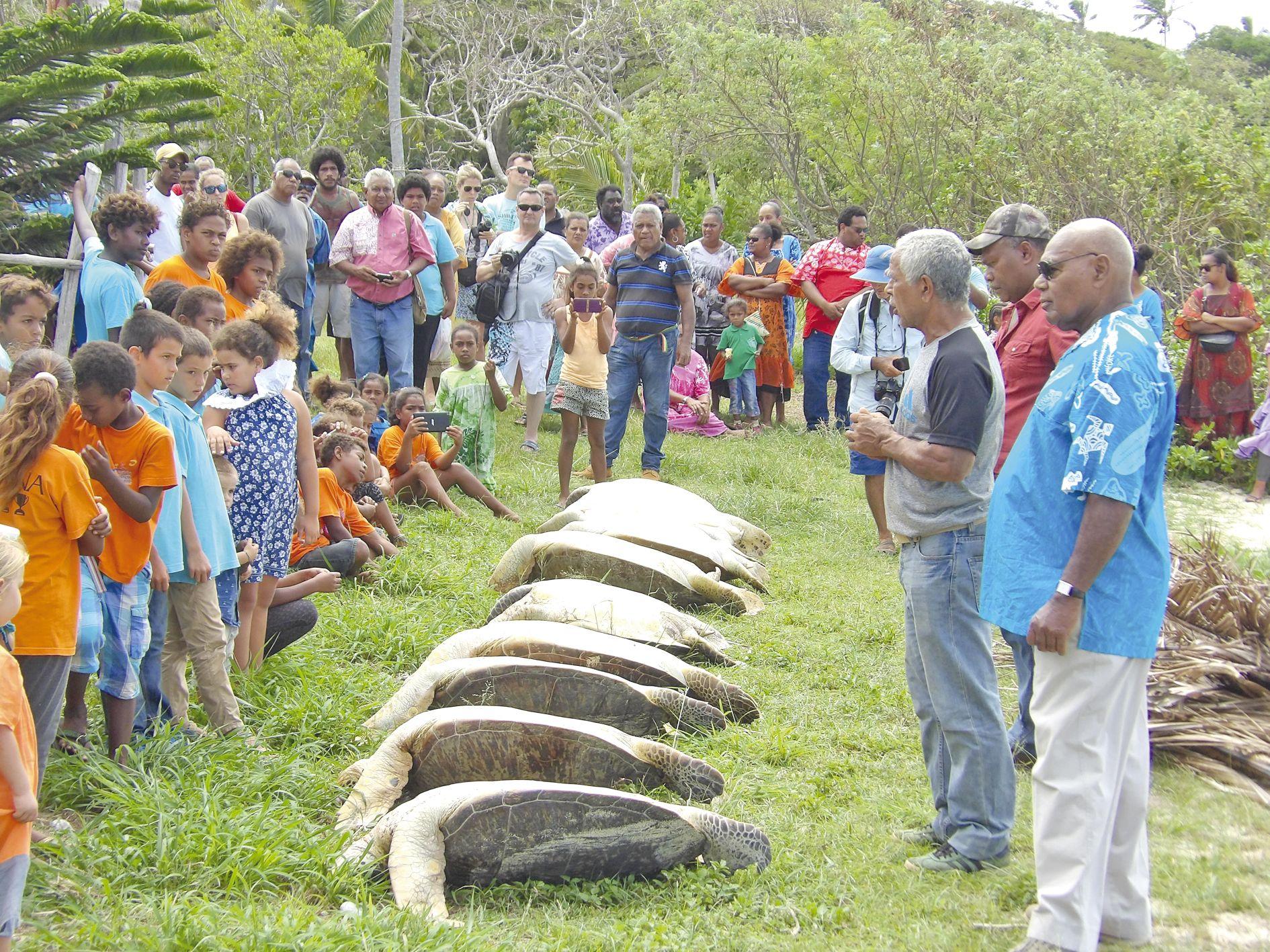 Point d\'orgue de la cérémonie de l\'igname nouvelle à Kunié, le partage des huit tortues, entre les tribus de l'île, à la baie de Saint-Maurice, où sont arrivés les premiers missionnaires. Le grand chef a mené la cérémonie de partage des animaux marins,