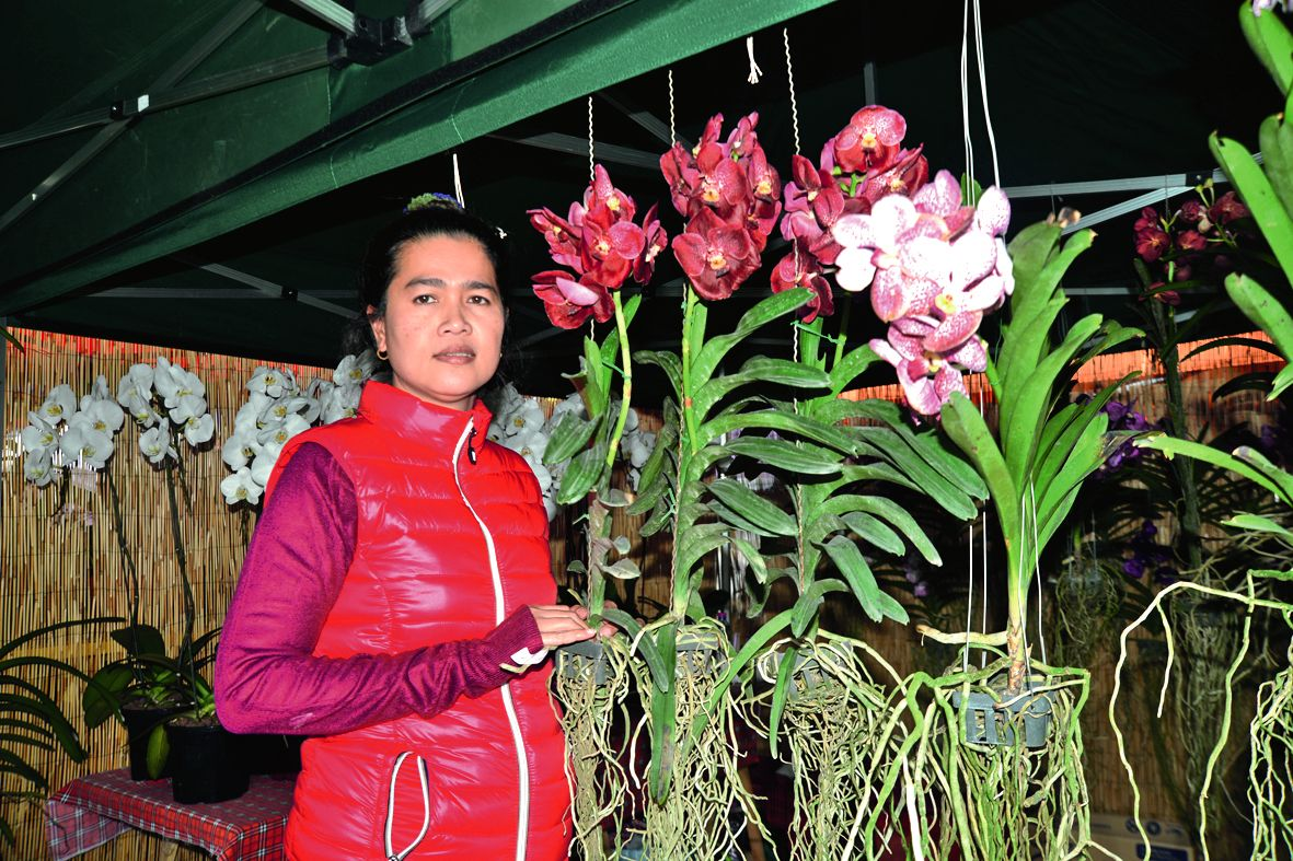 Depuis quatre ans,  le stand des orchidées fait le bonheur des collectionneurs.  On y retrouve deux variétés très recherchées : les vandas  et les phalaes.