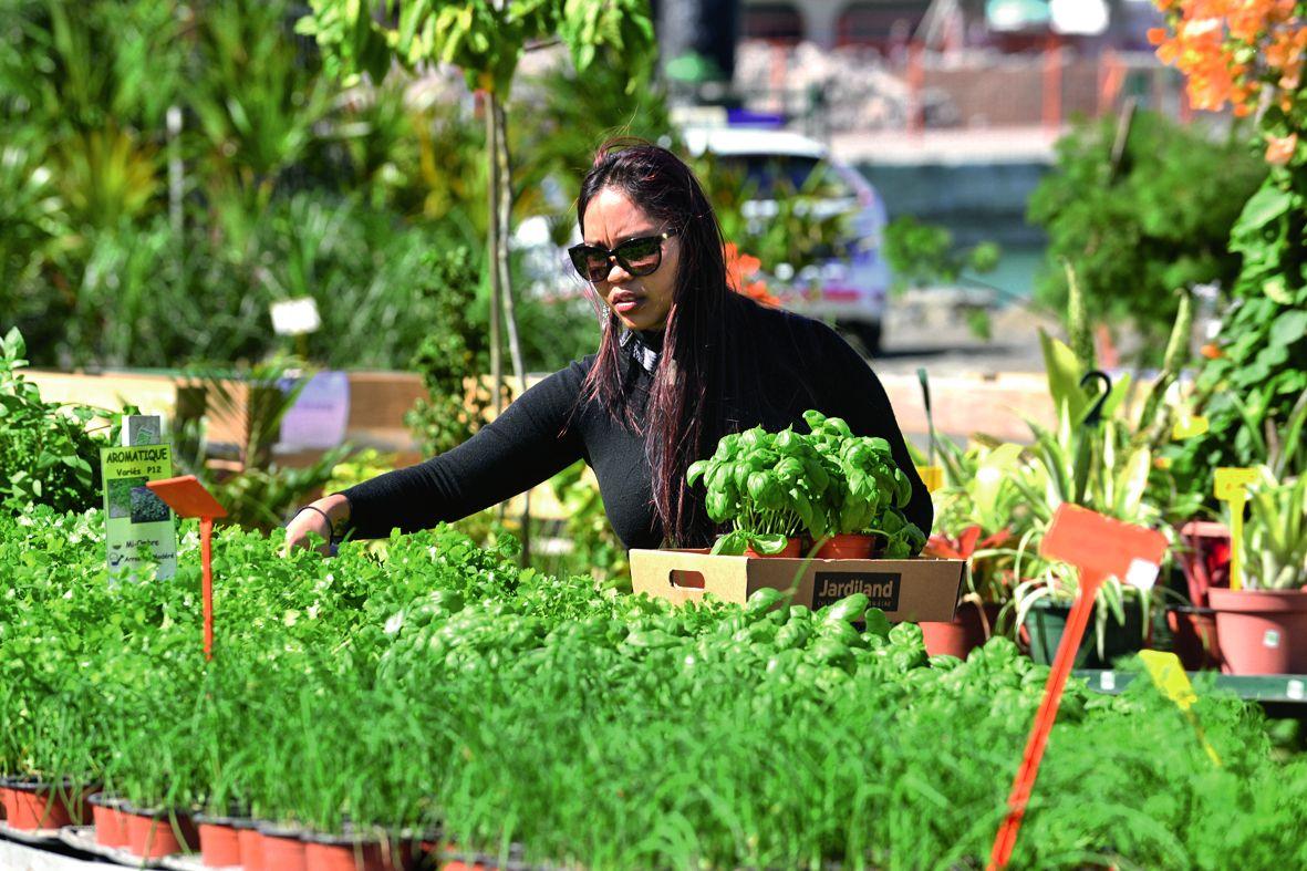 C'est l'heure de faire son potager ! Les aromates comme la ciboulette, le persil ou encore le laurier sont très prisés par les jardiniers amateurs. D'ailleurs, c'est la saison pour venir acheter et semer les plants de tomates, de melons, de salades ou enc