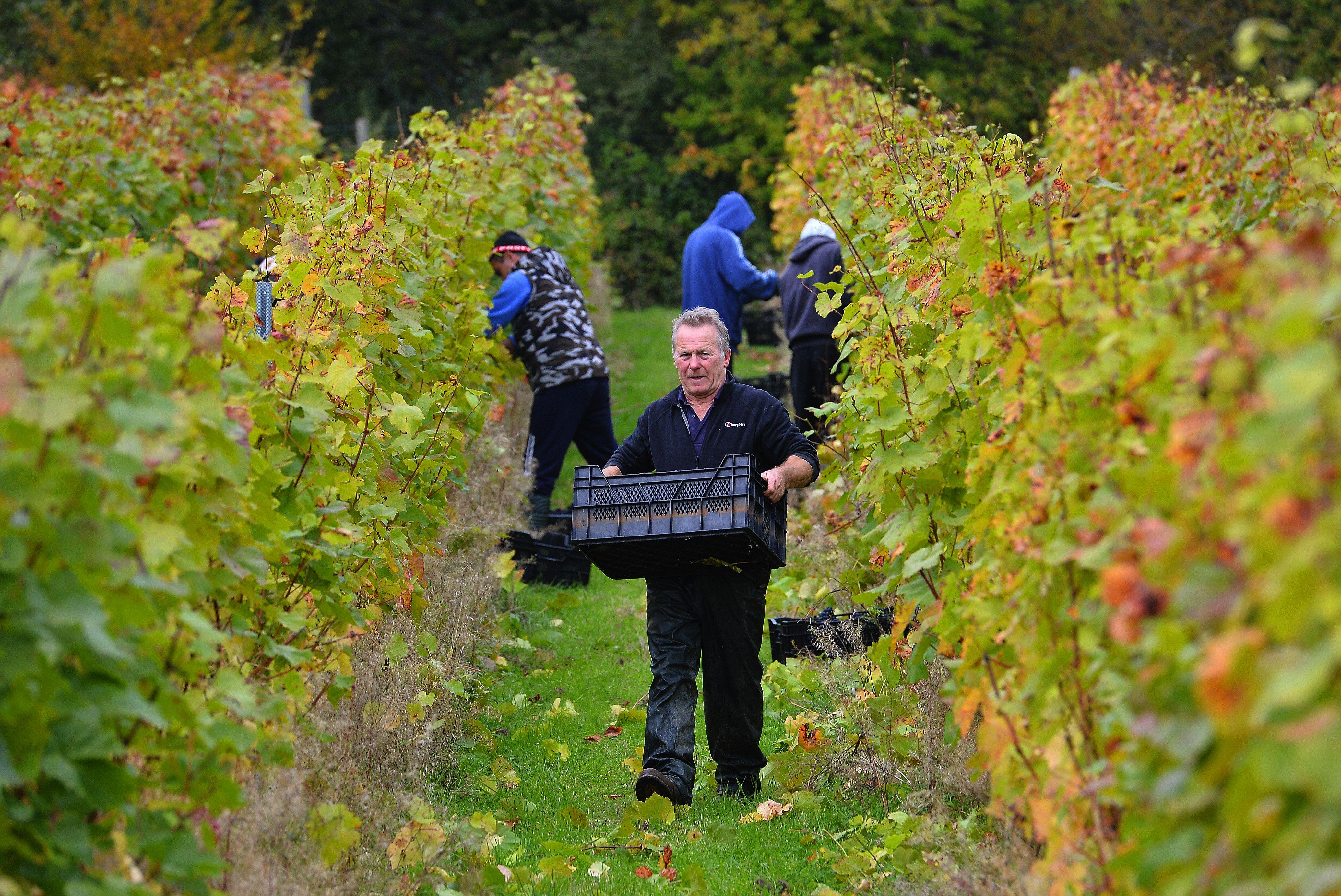 Les domaines anglais font cependant encore figure de Petit Poucet face aux géants champenois.Photo AFP
