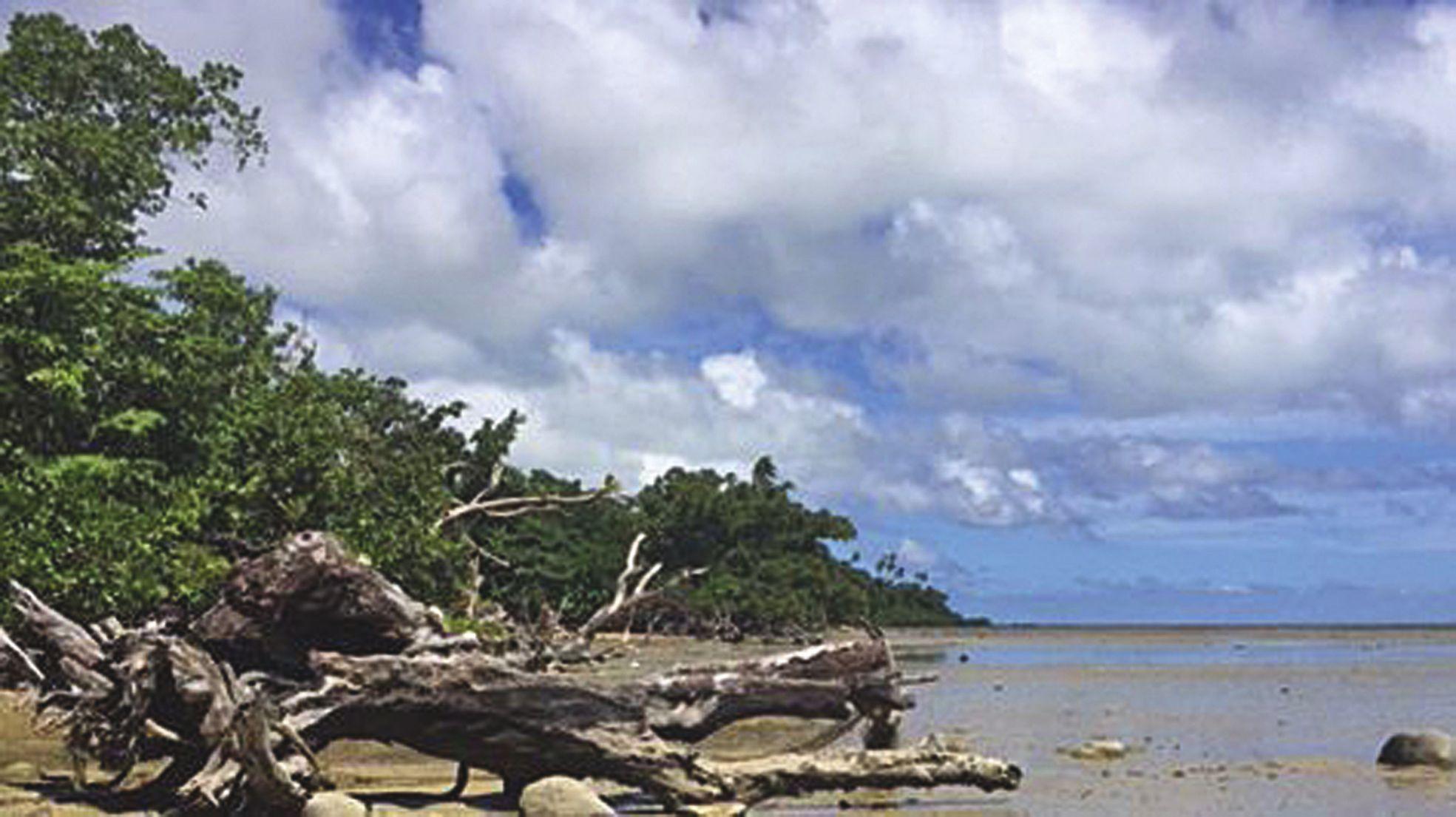 En 1990, une vaste plage de sable s'étendait à Utupoa. Il ne reste plus que la marne et des troncs morts.