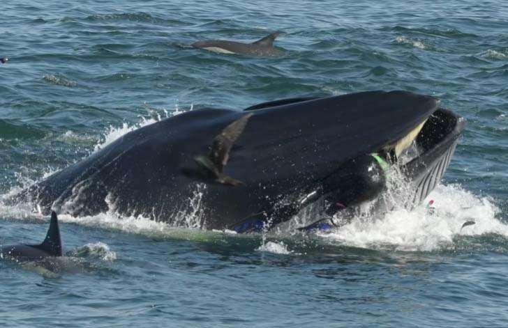 Une baleine avale un plongeur et le recrache…vivant (Vidéo)