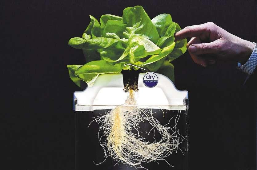 Les plantes grandissent sur des substrats de fibres de noix de coco ou de rochevolcanique enrichis d'éléments nutritifs.
