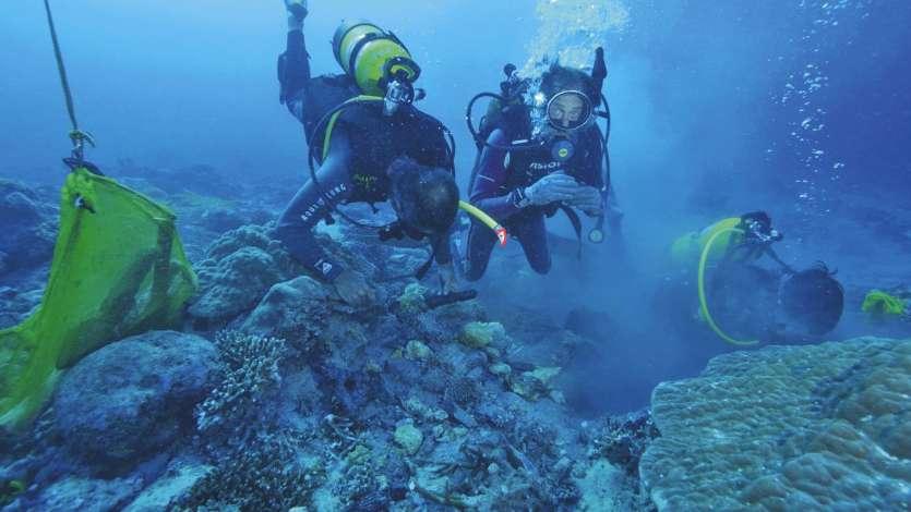 Les plongeurs de Fortunes de Mer sur le site, où l'épave est quasiment invisible tant elle est prise dans le corail. Photos Luc Faucompré