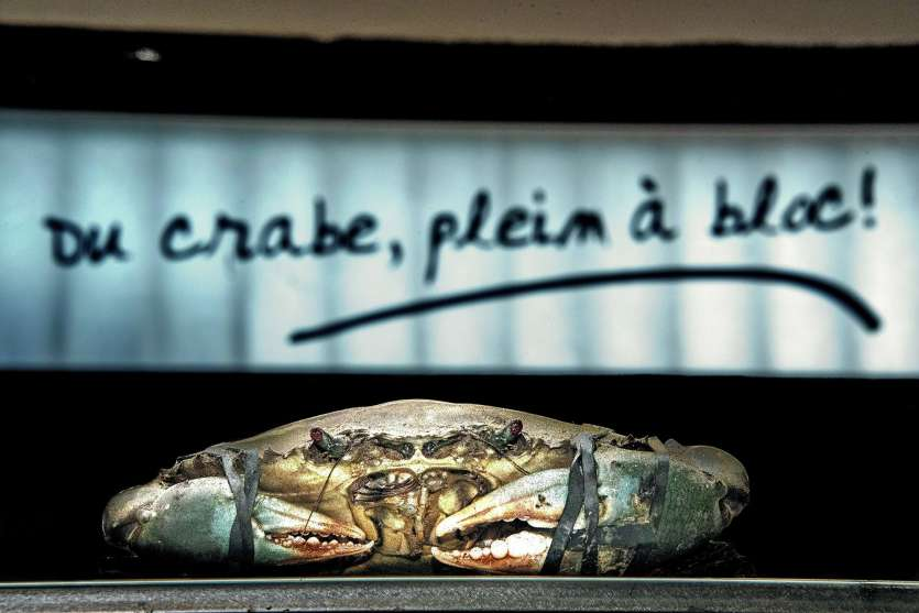 La pêche aux crabes de palétuviers est désormais rouverte pour le plus grand bonheur de tous les Calédoniens. Archives LNC