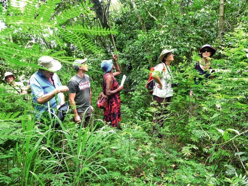 Si les papillons n'ont fait que passer, un parapluie japonais a permis au groupe d'observer les insectes présents dans la forêt. Photos S.C.