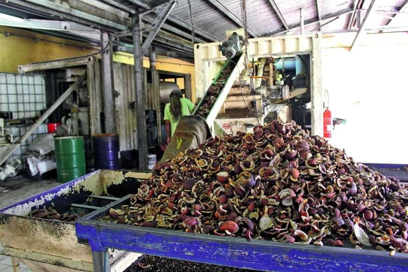 L'huile de coprah est avant tout destinée à la savonnerie de Wadrilla, mais aussi à deux parfumeurs de Nouméa et à l'usine Enercal d'Ouvéa. Photos S.M.