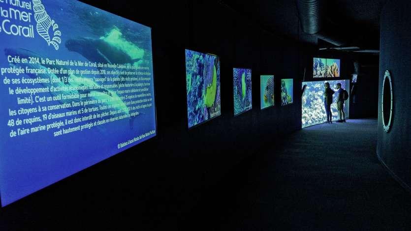 L'exposition est ouverte jusqu'au 30 juin à l'Aquarium de Paris.Photo ALP