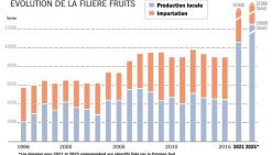 Les grandes ambitions de la  province Sud pour la filière fruits