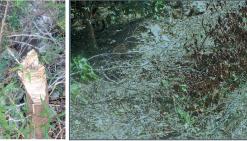 Des arbres de forêt sèche vandalisés au Fort Téréka