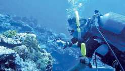 Le vinaigre : l'arme à l'essai  sur les dévoreuses de corail