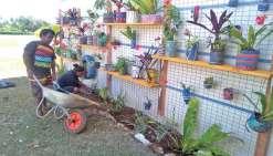 De l'amour des plantes est né un mur végétal