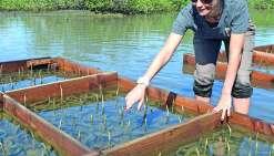 Etat des lieux de la mangrove, une biodiversité en danger à protéger