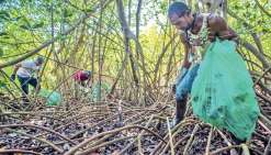 Ecosyndrome au chevet de la mangrove