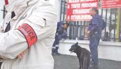 Une brigade canine pour assister la police municipale