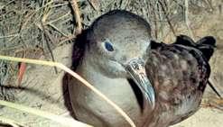 Les fientes d'oiseaux seraient bénéfiques au coraux. photo Archives LNC