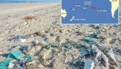 L'île Henderson, paradis pour les déchets