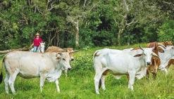 La ferme Néméara ouvre grand ses portes au public