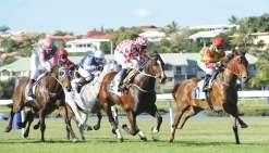 Douze chevaux pour succéder à Ivor Hill