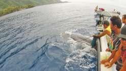 Un baleineau secouru par la population