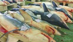 Les stocks de poisson ne sont pas inépuisables