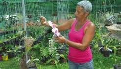 Les plantes bien-aimées  de Lydia Fromont