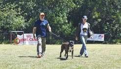 Les chiens passent leur certificat d'obéissance