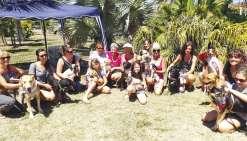La Bande à Nounou cherche des familles aux chiens abandonnés