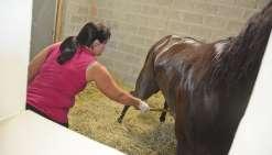 Dernier contrôle antidopage pour les chevaux à Nouméa
