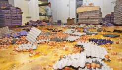 Dans le centre de conditionnement, une marée jaune recouvre le sol. Les œufs tapissent également les murs, le système de climatisation, les armoires électriques… « Tout est perdu », se désole Anita Lagarde, la propriétaire.