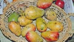 La Fête du fruit débarque  sur le Quai-Ferry
