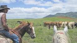 Deux fers à cheval pour  Pocquereux randonnées