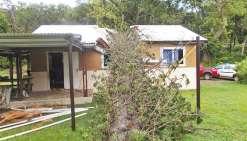 Un pin colonnaire coupe la maison en deux