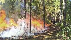 L'incendie qui a ravagé Kunié en septembre avait mobilisé une quinzaine  de pompiers de l'aérodrome et une dizaine de la sécurité civile.
