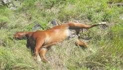 Le cheval retrouvé mort n'a même pas pu être récupéré en raison du terrain accidenté.