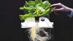 Sous les serres, fruits et légumes high-tech