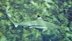 Les requins aussi ont leurs réseaux sociaux