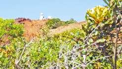 Près de 20 000 arbres seront bientôt plantés au cap N'Dua
