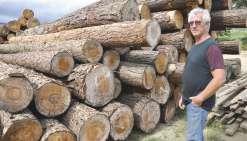 La filière bois prend racine dans le Nord