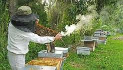 La production de miel peut-elle décoller ?
