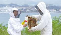 Le varroa, tueur d'abeilles en approche