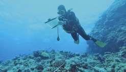 Un récif pristine immortalisé dans l'œil de la photographie