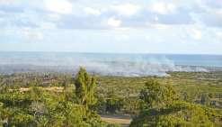 50 hectares brûlés plaine des Gaïacs
