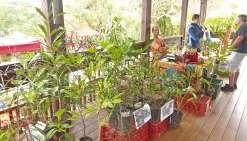 Au bonheur des plantes