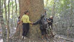Forêt de kaoris, le samedi 15 juillet. Sept personnes encerclent le tronc du premier kaori auprès duquel le groupe a fait une halte. L'arbre s'élance vers le ciel. En levant la tête, sa cime est imperceptible.