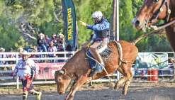 Chaque rodéo comprend seize montes sur bœuf et autant sur cheval. Le clown (ici Tino Lecren, à gauche) anime mais est aussi chargé de capter l'attention des bêtes une fois le rodéoman à terre.