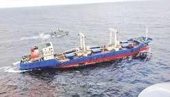 Condamnés pour avoir pêché 6 000 requins